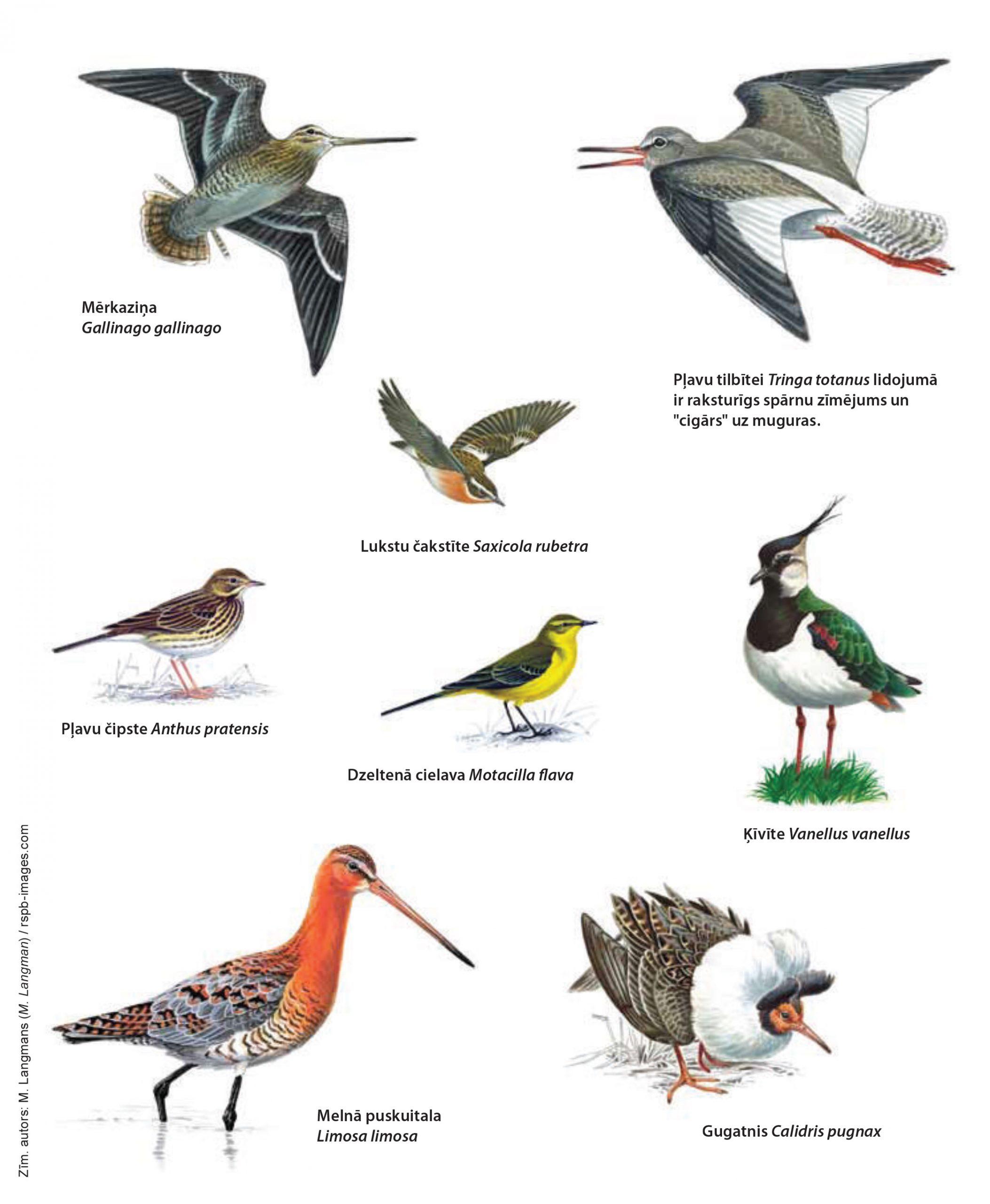 pļavu putni