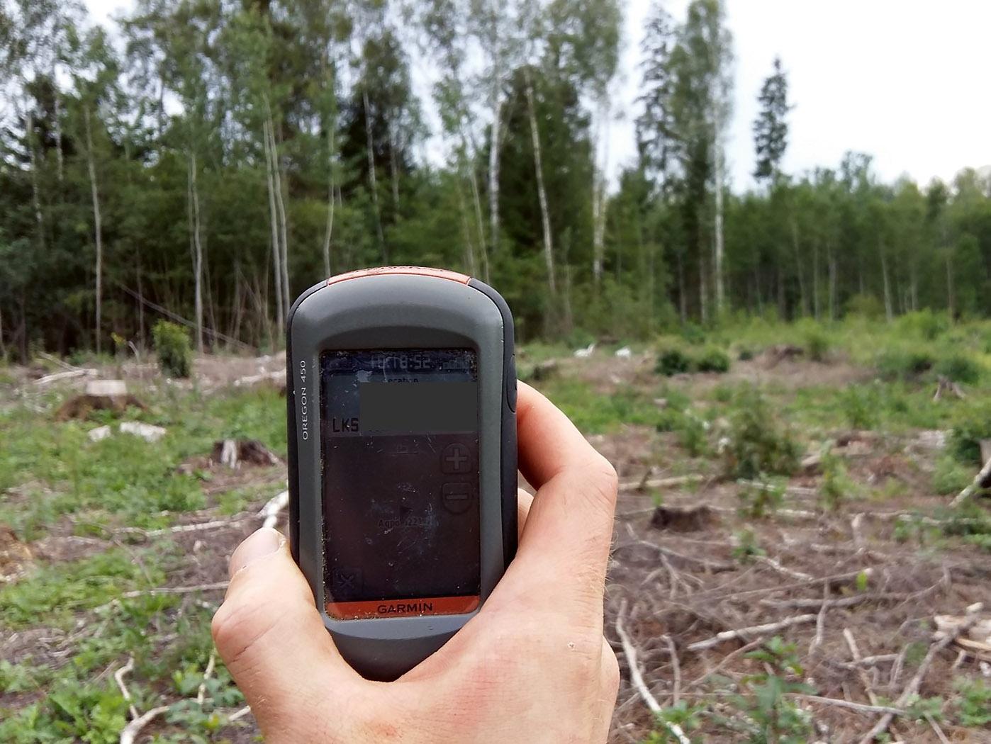 4. attēls. Ligzdas nogabals (ieskaitot ligzdas koku) ir nocirsts, mikrolieguma izveidošana atteikta. Šajā rajonā tika atrastas divas ligzdas– mazā ērgļa un peļu klijāna, nozāģēti ir abu ligzdu koki. 01.08.2019. | Foto: AndrisAvotiņš jun.